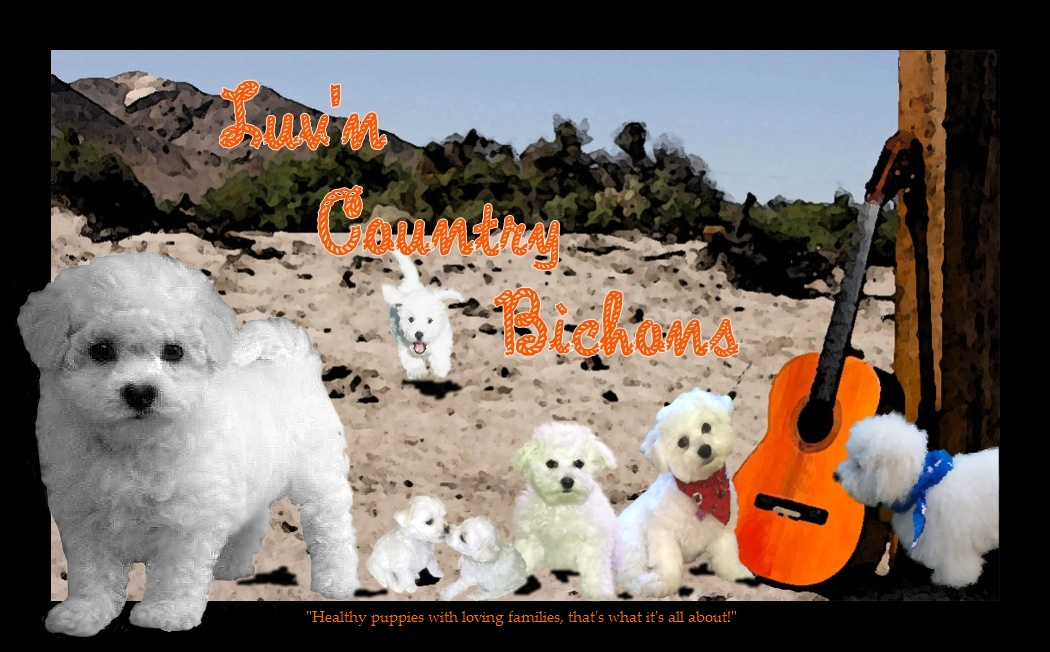 Bichon Puppies Oregon